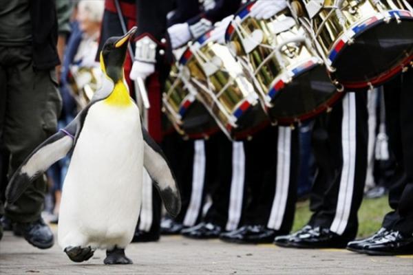 Прикрепленное изображение: сэр пингвин.jpg