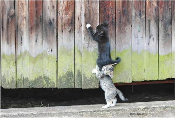 Прикрепленное изображение: котята.jpg
